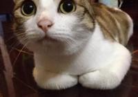 小區裡有戶人家專門把小貓領回家,養大了不做絕育就扔到小區裡,之後再養小貓,該怎麼制止他們?