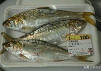 這魚在日本100元3條,在中國卻被忽略,全價蛋白勝牛奶,不吃可惜