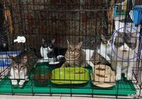 主人把貓咪關進籠子,帶頭貓咪立馬就毛了,表情讓人後背一涼
