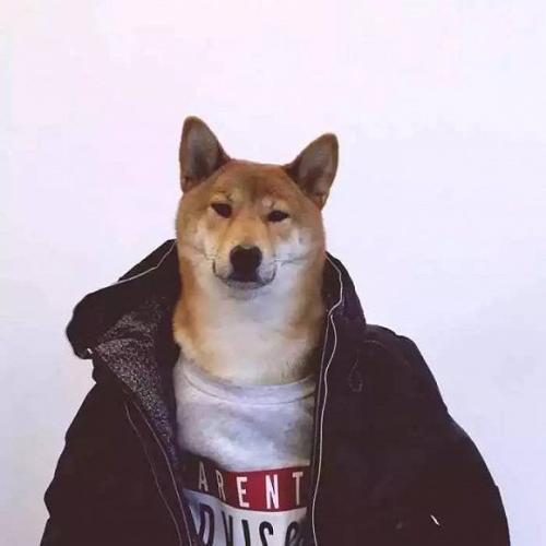 《是萌還是蠢?》——柴犬