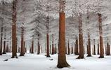 攝影圖集:絕美雪景之冰雪奇緣