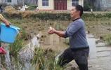 實拍湖南農村,家門口種水田,收過稻穀摸魚忙,這畫面你喜歡嗎