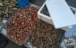 吃海鮮來青島 早市新鮮梭子蟹30元一斤 扇貝10元2斤 本地貨貴