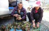 """農村有一""""野菜,營養不輸冬蟲夏草,富人最愛吃,農民卻給扔了"""