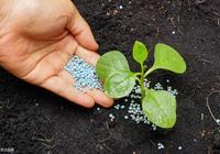 種菜小常識:蔬菜生產中應怎樣選擇合適的肥料種類?