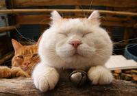 你見過哪些漂亮的貓咪,有多漂亮?