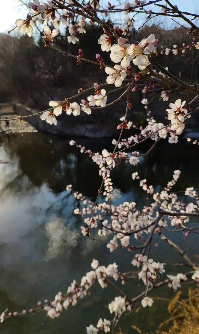 竟是國家重點建設植物園?三月底將開桃花節,屆時萬株桃花成海