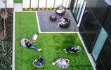 庭院設計:兩個有大面積草坪的私家花園,草坪也可以設計的如此美
