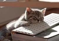養貓千日,用貓一時!貓咪實用手冊,瞭解一下……