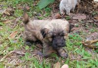 路邊草叢裡撿到兩隻小奶狗,男孩準備收養時,路人:這都不嫌棄