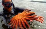 動物世界:海星,海洋裡的食肉魔鬼