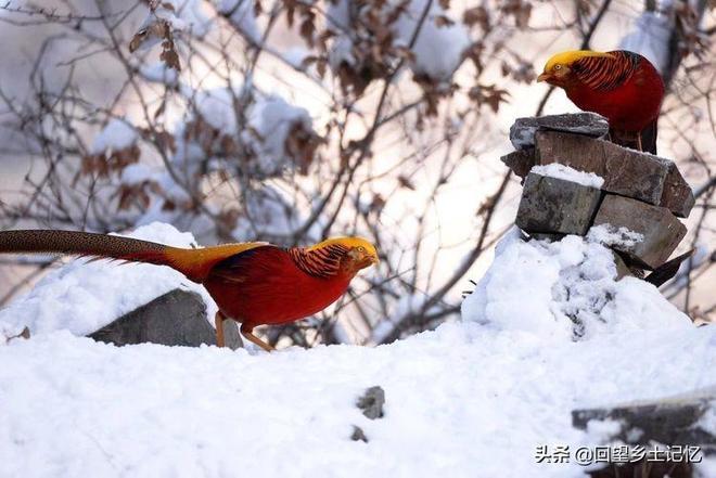 家鄉山裡這種鳥你長得漂亮也倒還罷  竟還與國際名人撞臉太牛氣了