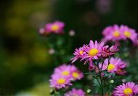 施肥不正確,植物根基脆弱不開花!如何對症施肥很重要!