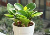 沒有難看的綠植,只有不會盆栽的花友,豆瓣綠養成記!