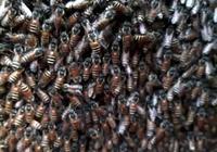 土蜂蜜這樣的蜂蜜應該很美味