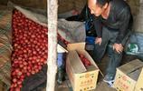 3元一斤,西紅柿價格持續堅挺,為何他家的口感與眾不同?