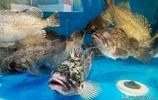 菜市場少量活海鮮價高 養殖大蝦受追捧 最便宜海鮮一塊五一斤