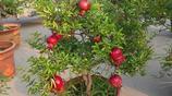 如果你家有地方,絕對要種上這幾種植物,好養還好看,隨吃隨摘!