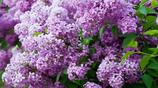 家裡的最大亮點!這麼好的盆栽可遇不可求,開出的花美到極致