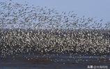 拍攝鳥浪只要注意這幾點 你就能拍出震撼大片