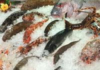 水產養殖魚苗魚種的常見病