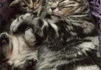 貓媽媽和貓寶寶一起睡覺,而貓寶寶先醒了,貓媽媽噩夢就開始了