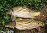 野釣小技巧:魚不咬鉤時用這幾招,保你滿載而歸