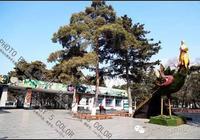 影像吉林|江南公園周邊消失的建築(吉林十年)