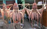這幾種湛江特產,廣東人吃的滿嘴油,湖南人卻表示:只敢看不敢吃