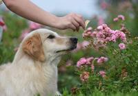 如果接受不了狗狗這些缺點,勸你不要養狗!