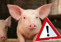 人誤食了有非洲豬瘟的肉會出現什麼病症?