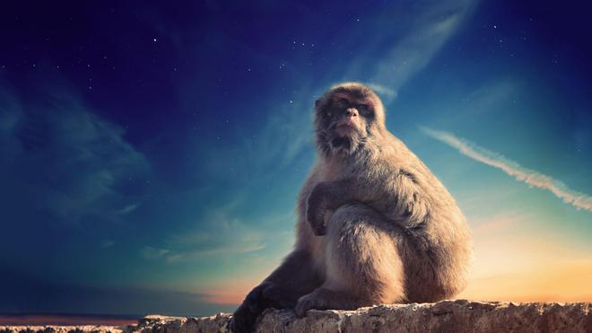 動物圖集:自然動物