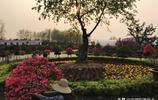 探訪皖西學院植物園:千株杜鵑、映山紅盆景奼紫嫣紅,爭奇鬥豔