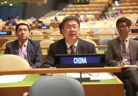 聯合國大會審議通過《聯合國森林戰略規劃(2017-2030)》