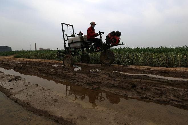 80後美女回鄉種地5000畝帶200農民致富