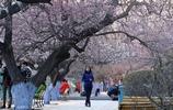 哈爾濱的春天被一樹杏花喚醒,這裡處處美景處處美女
