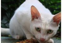 公園流浪貓看中一個善良女孩,倒在她身邊女孩,你的貓掉了