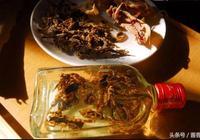 蠍子泡酒的製作方法,蠍子泡酒功效