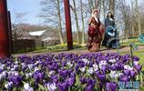 荷蘭庫肯霍夫公園:欣賞鬱金香之美