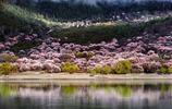 西藏林芝,風景如畫,被稱為西藏的江南