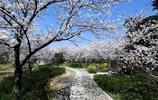 南京6大賞櫻地推薦!美麗金陵城賞櫻花的地方有哪些?