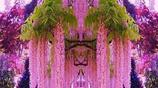 如此浪漫的爬藤你見過嗎?花朵彷彿瀑布般,讓你置身於花海中