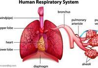 哪種偏方治療咳嗽痰多最有效,最養護氣管?