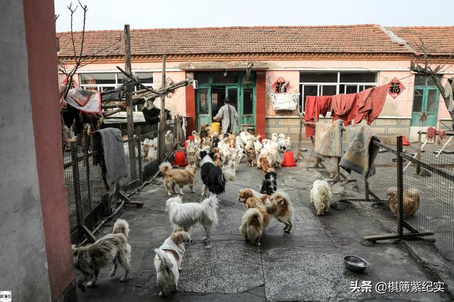 71歲患癌老人:10年前被判只能活3個月,如今已收養500只流浪狗