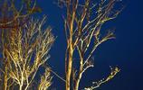 圖蟲風光攝影:邛海風光—月色風情小鎮