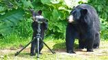 攝影師歷時三年,在自己家花園,拍攝黑熊超萌擬人照