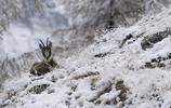 冬天來了,怕冷的小夥伴可以考慮入手這兩款羽絨服