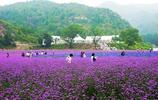 薰衣草的世界