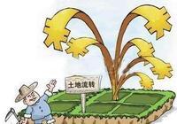到了2050年,現在的農民還算農民呢?不叫農民叫什麼?