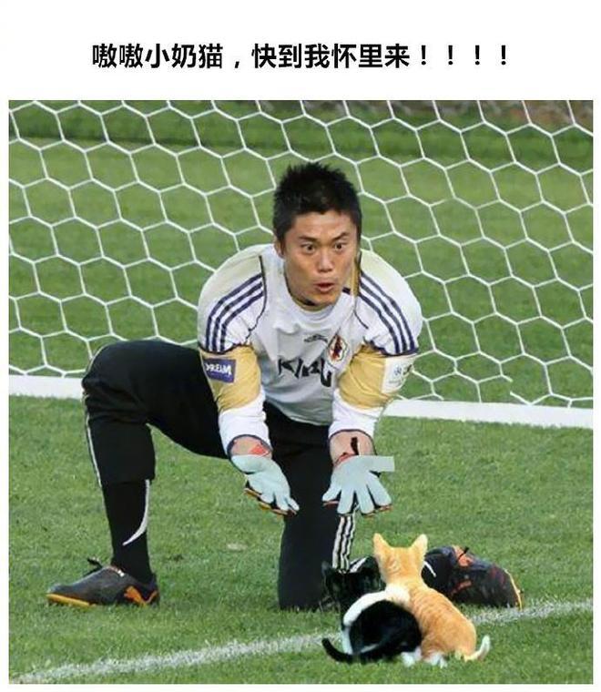 當足球比賽中混入了貓,這畫風簡直是一波吸貓表情包,守門員也是各種亮「喵喵」